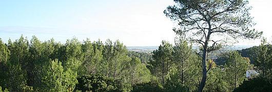 Le domaine d'Escattes, forêt communale de Nîmes