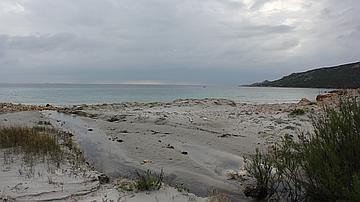 Habitat typique du Crapaud vert en Corse (réserve biologique de Funtanaccia)
