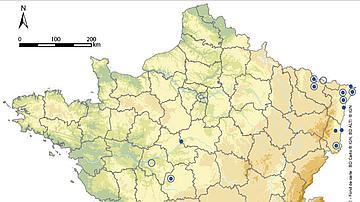 Carte de répartiton du Pélobate brun