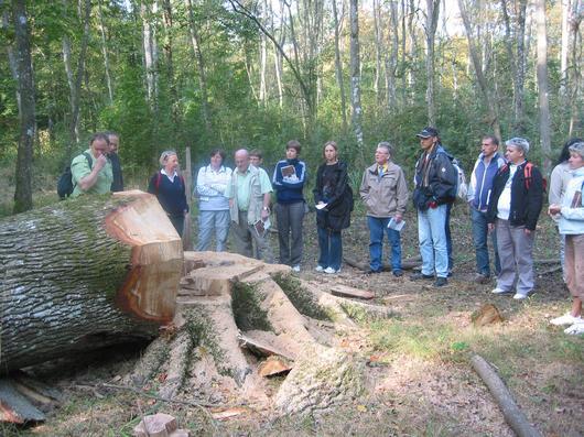 Les forestiers travaillent pour produire des arbres de haute qualité et pour préserver les habitats