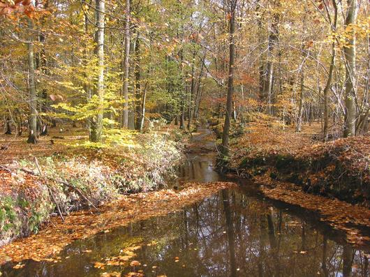 Le ruisseau du Hardtbach