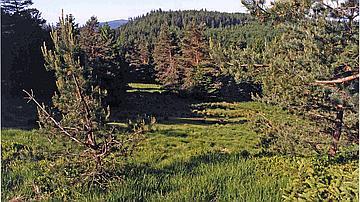 La réserve biologique du Baerenberg-Schneeberg