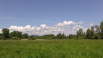 Un aperçu des milieux ouverts sur le site de la Lauter