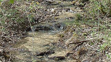 Le ruisseau de la Combe Baudot - Forêt domaniale de Châtillon (Côte-d'Or)