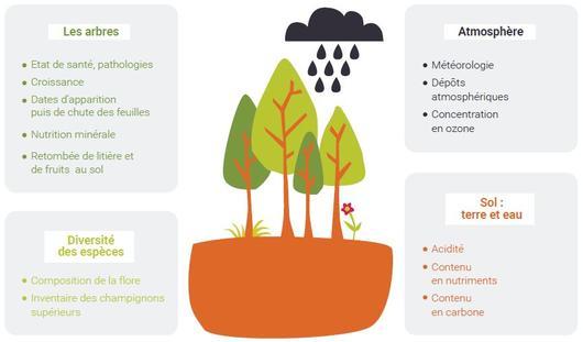 Les composantes de l'écosystème forestier observées dans le réseau RENECOFOR