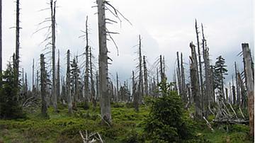 Arbres morts dans les Monts des géants (République tchèque)