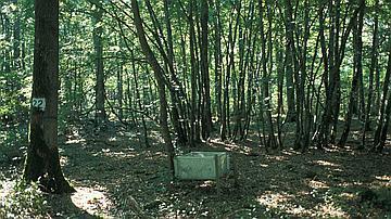 Des collecteurs de litière sont installés pour récupérer les feuilles, les branches et tous les autres éléments qui retombent au sol